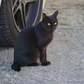 兄貴の家の黒猫さん