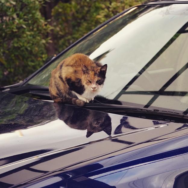 温泉町の三毛猫さん