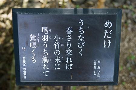 雌竹・女竹(メダケ)