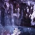 写真: 白ひげの滝壺