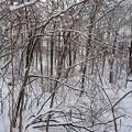 写真: 雪降りのあとの小さな森