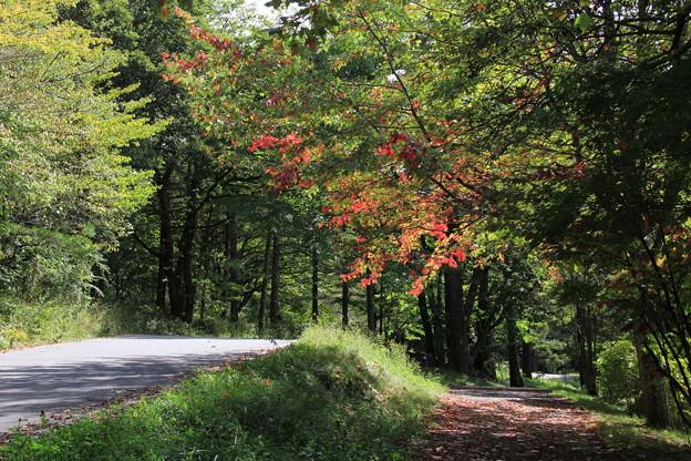 女神湖周辺も少しずつ葉が色づいて