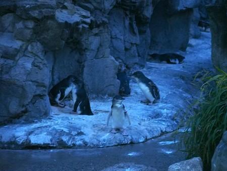 20140813 葛西 夜のペンギンプール04
