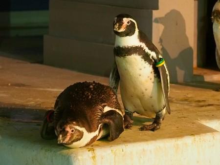 20140823 野毛山 夜のペンギンプール14