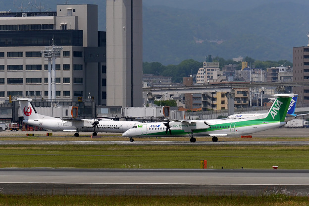 Photos: 緑と白