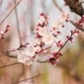 Photos: 薔薇族