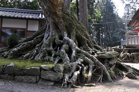 根っこのすばらしい木