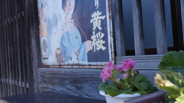 写真: 黄桜 小江戸・佐原38