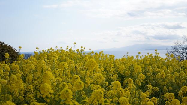 写真: 春の背比べ