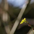 Photos: 春の息吹 その2