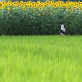 Photos: 夏とかけっこ