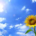 Photos: 夏空を見送って