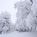 写真: 2224 蔵王の樹氷@山形