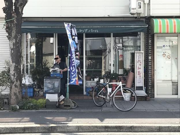 20170312 ペットショップパール