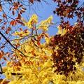 写真: 赤青黄色