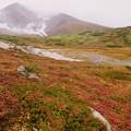 Photos: 雨に煙る旭岳を望む