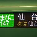 [E5系][やまびこ147]仙台