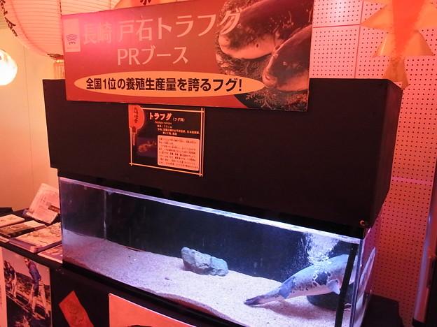 20170205 長崎ペンギン水族館 04