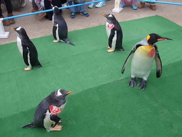 20170205 長崎ペンギン水族館 19