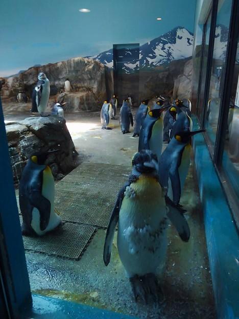 20170314 長崎ペンギン水族館 04