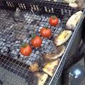 Photos: トマトかわいい