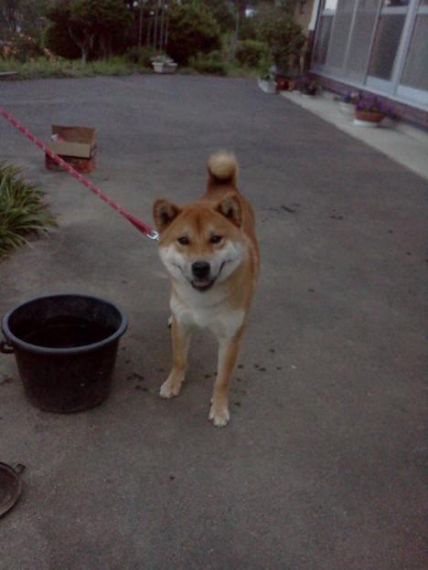 Photos: 犬かわいい