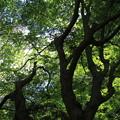 写真: 木洩れ日