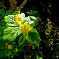 朝の木漏れ日(自宅の花)