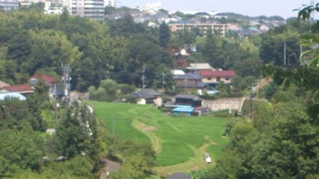 東京の棚田