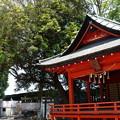Photos: 上総一宮 玉前神社