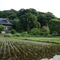 Photos: 座間 谷戸山公園 2