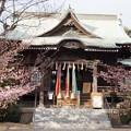 Photos: 桜神宮