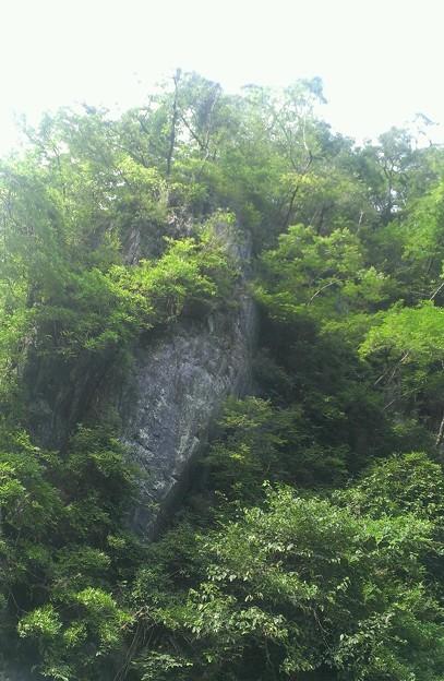 木に埋もれた岩肌