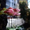 Photos: そろそろ咲くかな