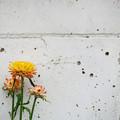写真: 壁ぎわの花