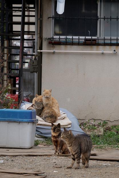 Photos: 猫だまり