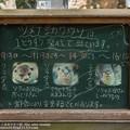 Photos: noichi140524018