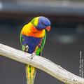 Photos: alohagarden140915009