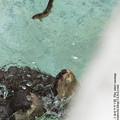 Photos: alohagarden140915280