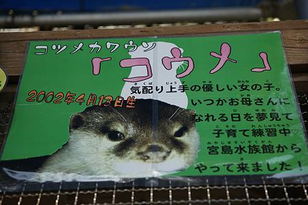 katurahama110311004