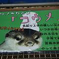 Photos: katurahama110311004