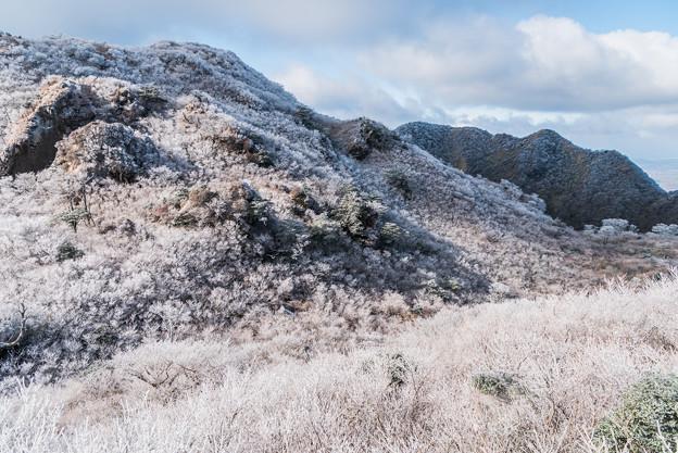 谷間の霧氷