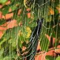 蜘蛛の糸・・09:20