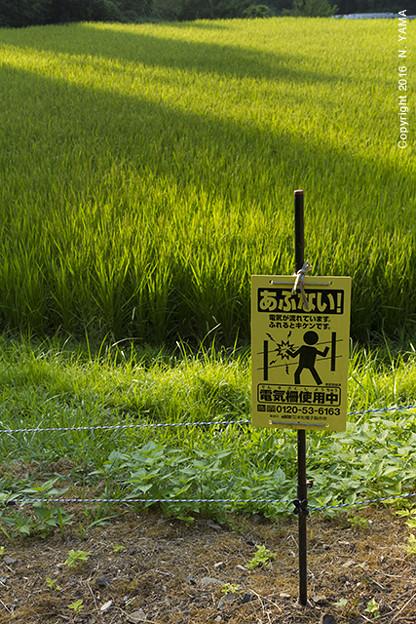 Photos: 電気柵