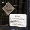 写真: 鳥インフルエンザ対策