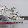 写真: 川口港へ帰港の大型漁船