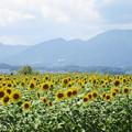 琵琶湖 第一なぎさ公園