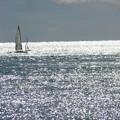 写真: 陽光燦きの海に