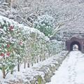 Photos: 太宰府天満宮へのトンネル
