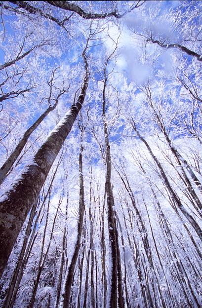 林に佇む物語